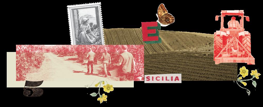Colleroni Frutta in Sicilia