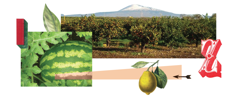 Distribuzione Frutta in Sicilia
