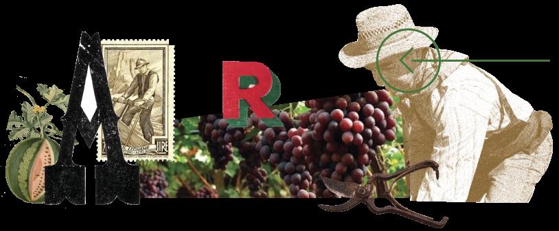 frutta di sicilia